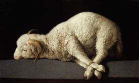 Francisco de Zurbarán, The Bound Lamb, 1635–40. Rights reserved © Museo Nacional del Prado–Madrid.